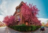 Топ-10 самых красивых весенних мест Украины